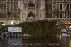Christbaum-fuer-Muenchen-2019-005