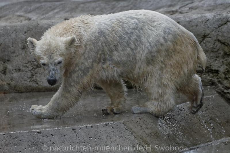 Hellabrunn - Eroeffnung Polarwelt 0380
