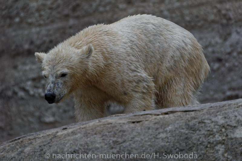 Hellabrunn - Eroeffnung Polarwelt 0390