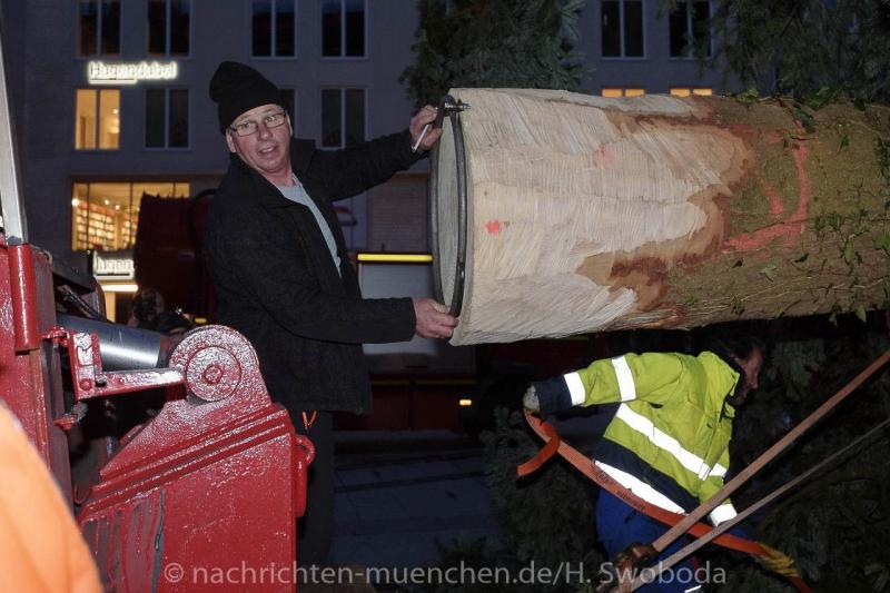Christbaum fuer Muenchen 0090