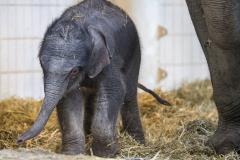 Elefant Otto erkundet sein Zuhause