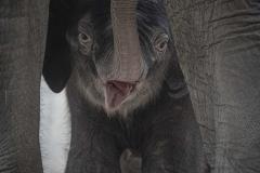 Elefant-Otto_Hellabrunn_2020_Navin-Adami-2