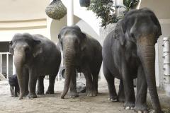 Elefantenkuehe-mit-Otto_Hellabrunn_2020_Navin-Adami-2