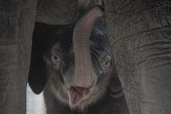 Elefant Otto trifft seine Tanten