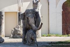 Elefant-Otto-erkundet-die-Aussenanlage-1-von-21
