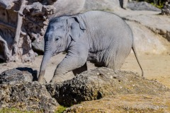 Elefant-Otto-erkundet-die-Aussenanlage-12-von-21