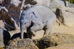 Elefant-Otto-erkundet-die-Aussenanlage-13-von-21