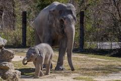 Elefant-Otto-erkundet-die-Aussenanlage-15-von-21