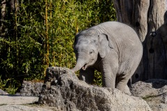 Elefant-Otto-erkundet-die-Aussenanlage-17-von-21