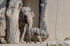 Elefant-Otto-erkundet-die-Aussenanlage-18-von-21