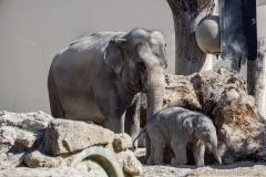 Elefant-Otto-erkundet-die-Aussenanlage-19-von-21