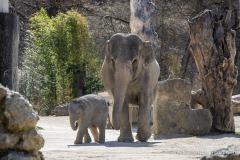 Elefant-Otto-erkundet-die-Aussenanlage-20-von-21