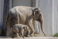 Elefant-Otto-erkundet-die-Aussenanlage-21-von-21