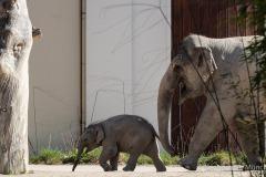 Elefant-Otto-erkundet-die-Aussenanlage-4-von-21