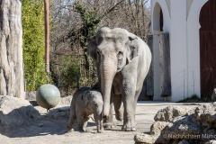 Elefant-Otto-erkundet-die-Aussenanlage-6-von-21
