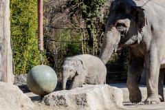 Elefant-Otto-erkundet-die-Aussenanlage-9-von-21