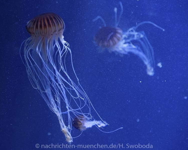 Sea Life - Fischinventur 0010