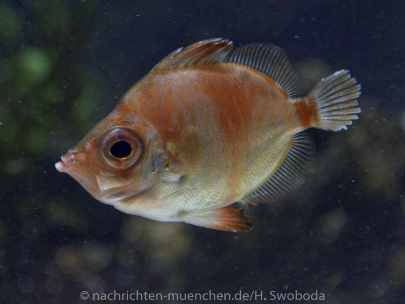 Sea Life - Fischinventur 0020