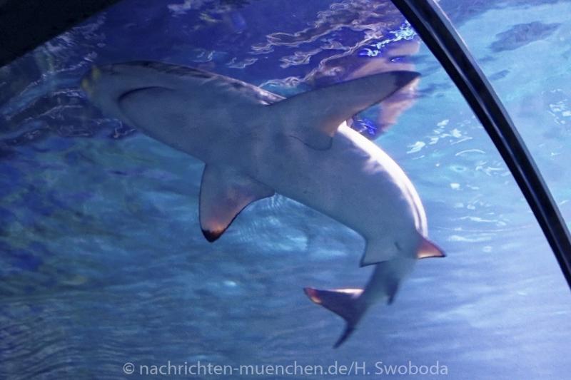 Sea Life - Fischinventur 0030