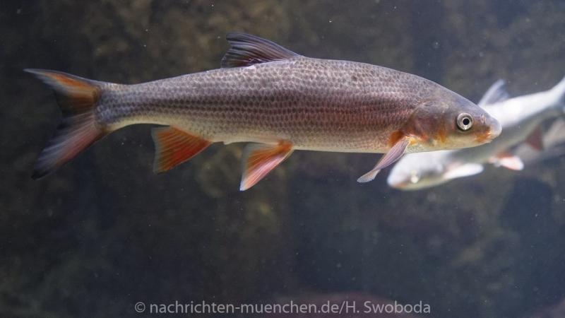 Sea Life - Fischinventur 0070