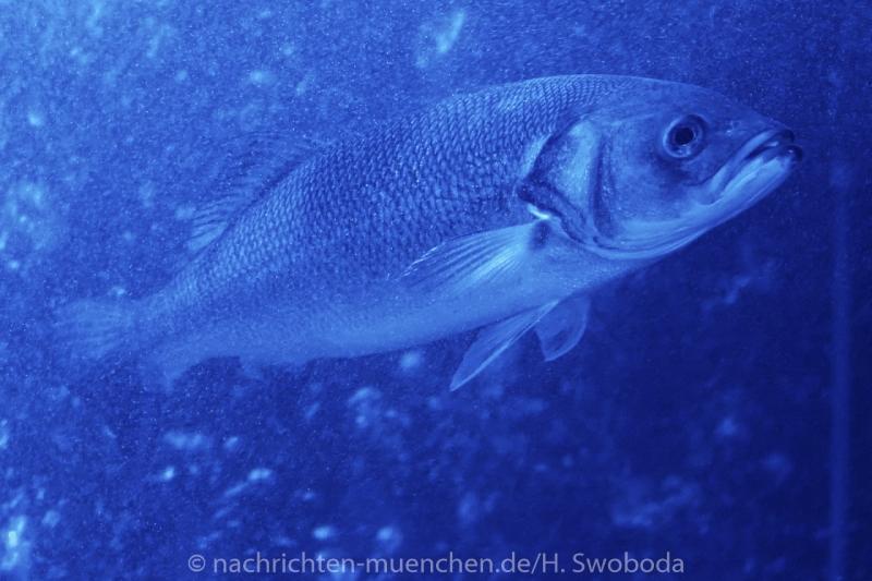 Sea Life - Fischinventur 0110