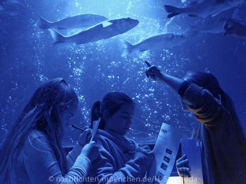 Sea Life - Fischinventur 0120
