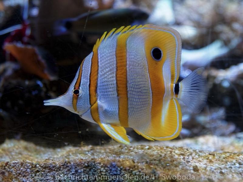 Sea Life - Fischinventur 0140