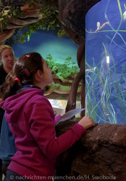 Sea Life - Fischinventur 0160