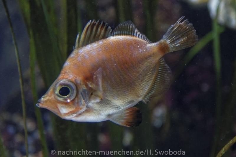 Sea Life - Fischinventur 0180