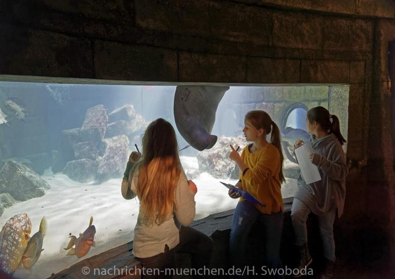 Sea Life - Fischinventur 0190