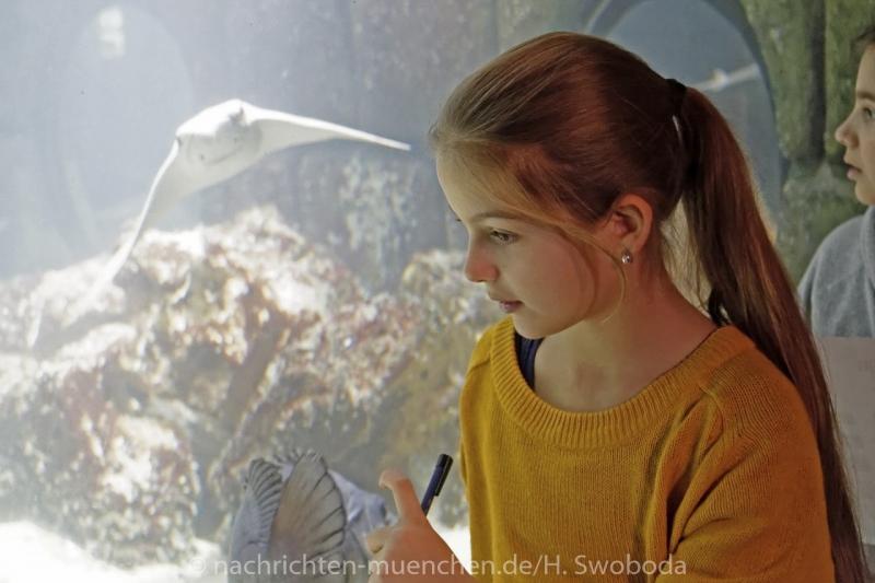 Sea Life - Fischinventur 0200