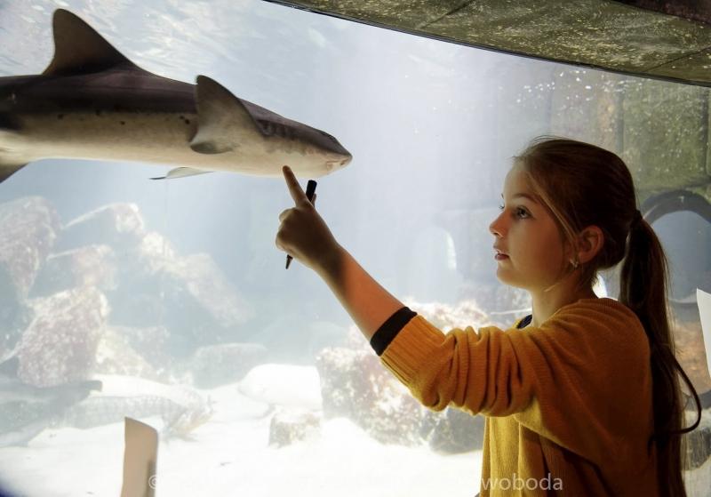 Sea Life - Fischinventur 0220