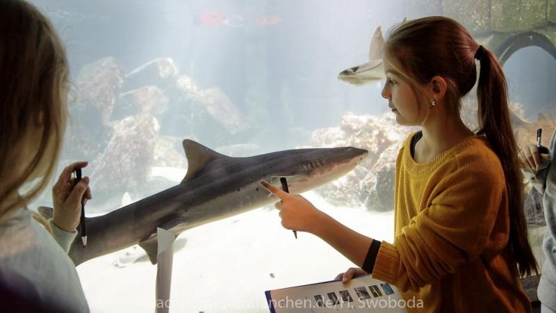 Sea Life - Fischinventur 0230