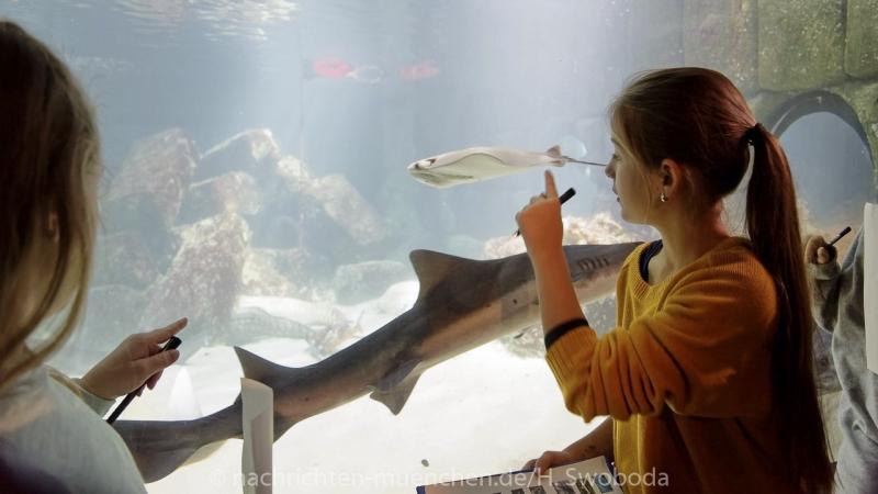 Sea Life - Fischinventur 0240
