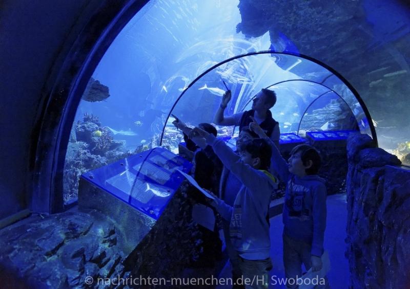 Sea Life - Fischinventur 0290