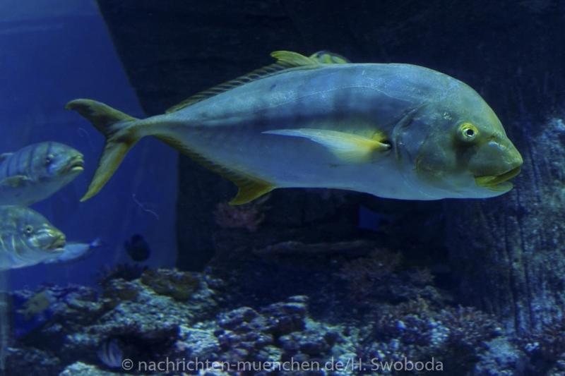 Sea Life - Fischinventur 0300
