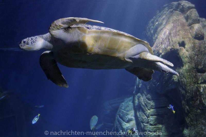 Sea Life - Fischinventur 0310