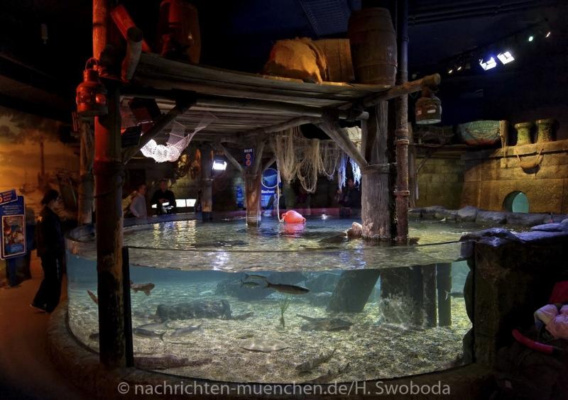 Sea Life - Fischinventur 0330