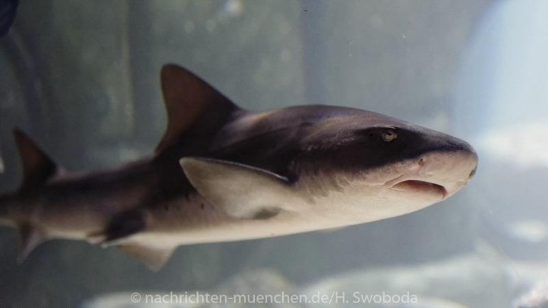 Sea Life - Fischinventur 0350