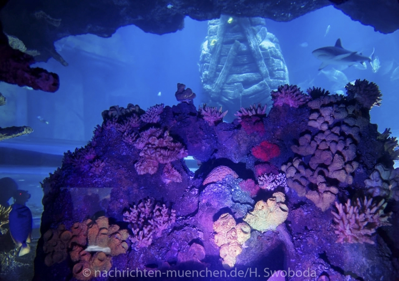 Sea Life - Fischinventur 0360