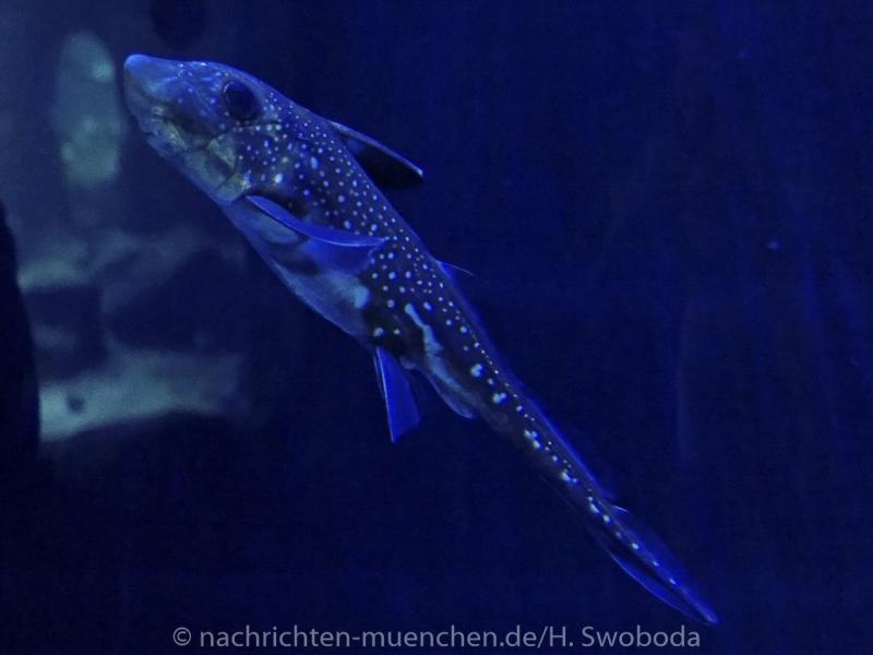 Sea Life - Fischinventur 0370