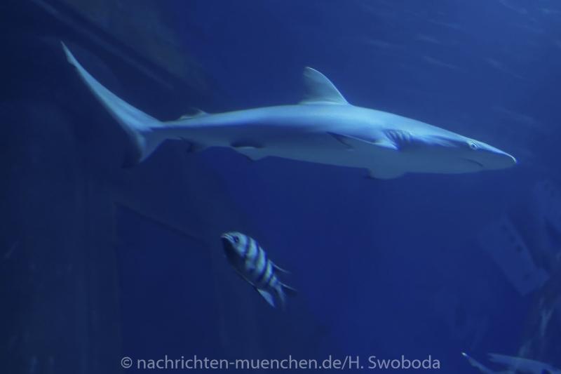 Sea Life - Fischinventur 0380