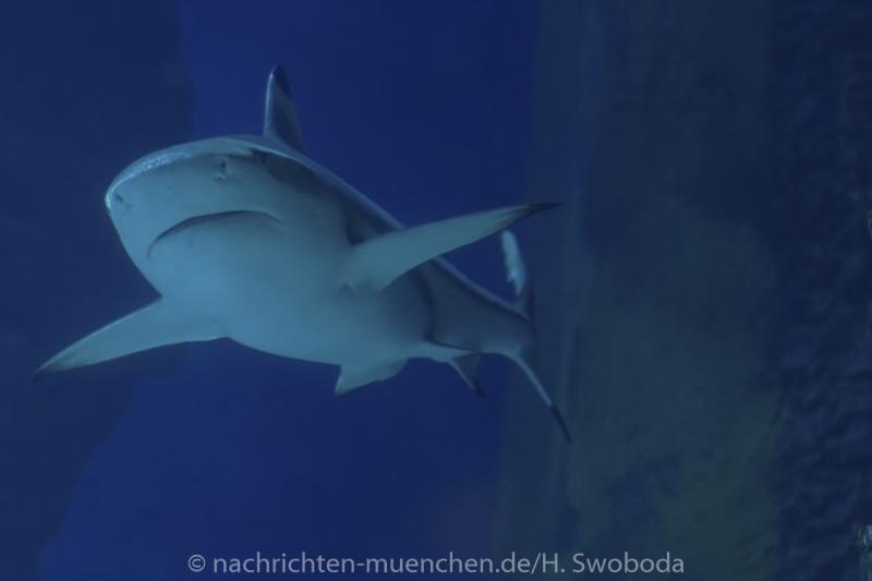 Sea Life - Fischinventur 0390