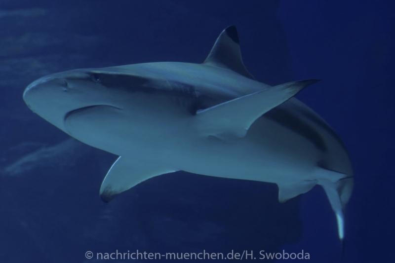 Sea Life - Fischinventur 0400