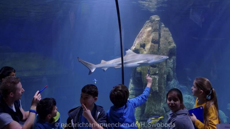 Sea Life - Fischinventur 0410