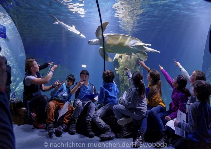 Sea Life - Fischinventur 0430