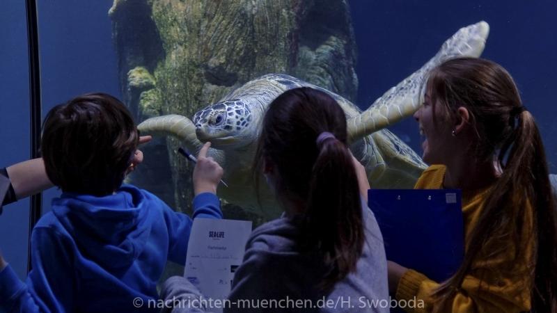 Sea Life - Fischinventur 0440