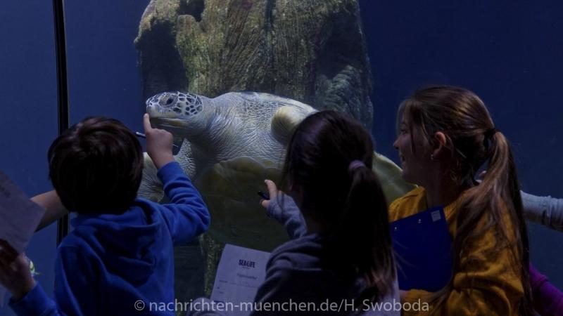 Sea Life - Fischinventur 0450