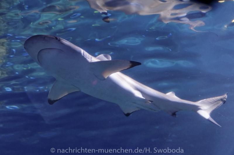 Sea Life - Fischinventur 0460