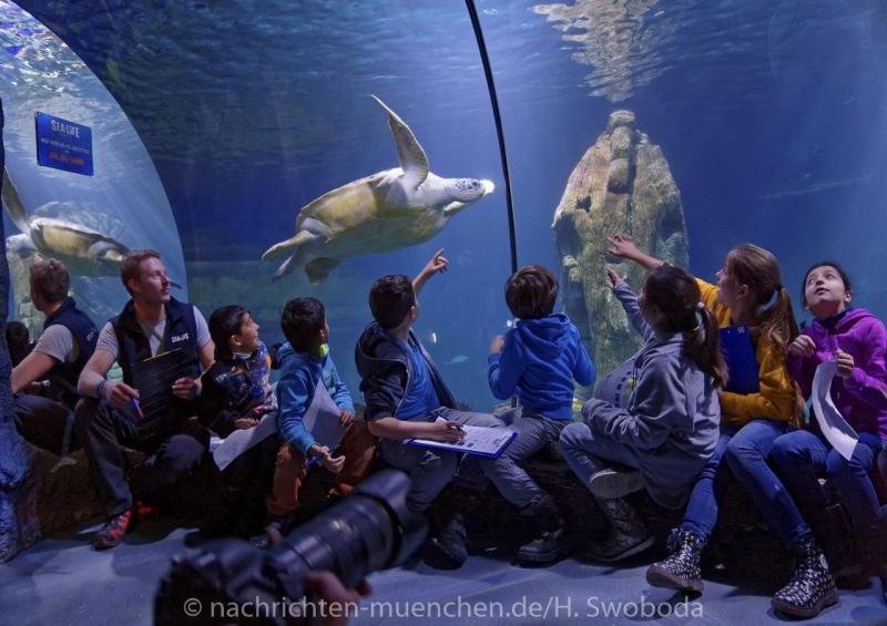 Sea Life - Fischinventur 0470